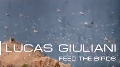 Feed the birds – Lucas Giuliani